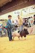 19SC-Swine-6011.jpg
