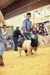 19SC-Swine-6013.jpg