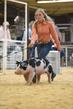 19SC-Swine-6476.jpg