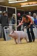 19SC-Swine-6737(1).jpg