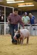 19SC-Swine-6744(1).jpg
