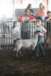 19WT-BreedingSheep-1491.jpg