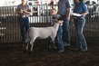 19WT-BreedingSheep-1492.jpg