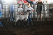 19WT-BreedingSheep-1493.jpg