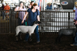 19WT-BreedingSheep-1494.jpg
