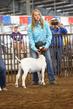 19WT-GoatHS-7353.jpg