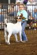 19WT-GoatHS-7432.jpg