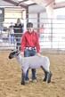 20GO_SheepHS_7763.jpg