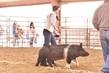20GO_SwineHS_7393(1).jpg