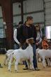 20HCC - Market Goat Champion Drive-2996.jpg