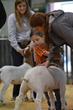 20HCC - Market Goat Champion Drive-2998.jpg