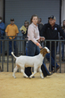 20HCC - Market Goat Showmanship-3033(1).jpg