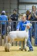 20HCC - Market Lambs-2068(1).jpg