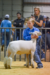 20HCC - Market Lambs-2069(1).jpg