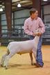 20HCC - Market Lambs-2074(1).jpg