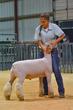 20HCC - Market Lambs-2080(1).jpg