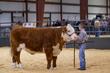 20HCC - Market Steers - Heifers-3013(1).jpg