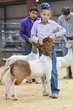 20HCD - District Market Goats-4486.jpg