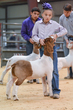 20HCD - District Market Goats-4485.jpg