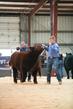 20HCD - Market Steers -4634.jpg