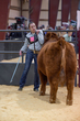 20HCD - Market Steers-3419.jpg