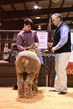 20HCD-BreedingSheep-7302.jpg