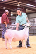 20HCD-BreedingSheep-7679.jpg