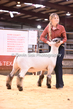 20HCD-BreedingSheep-7763.jpg