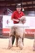 20HCD-BreedingSheep-7898.jpg