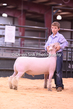 20HCD-BreedingSheep-7953.jpg