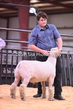 20HCD-BreedingSheep-7954.jpg