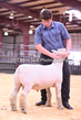 20HCD-BreedingSheep-7957.jpg
