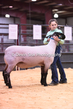 20HCD-BreedingSheep-8048.jpg