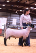 20HCD-BreedingSheep-8050.jpg