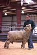 20HCD-BreedingSheep-8112.jpg