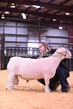 20HCD-BreedingSheep-8114.jpg