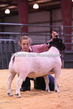 20HCD-BreedingSheep-8115.jpg