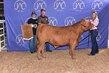 20JW-CattleBD-7092.jpg