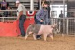20JW-SwineBGCrossHS-6731.jpg