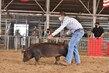 20JW-SwineBGDurocHS-6613.jpg