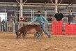 20JW-SwineBGDurocHS-6615.jpg