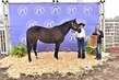 20JW_HorseBD_5253.jpg