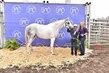 20JW_HorseBD_5254(1).jpg