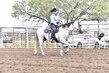 20JW_Horse_5446.jpg