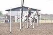 20JW_Horse_5515.jpg