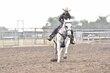20JW_Horse_5518.jpg