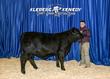 20KK - CattleBD-5725(1).jpg