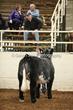 20LC-CattleHS-1138.jpg