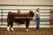 20LC-CattleHS-1295(1).jpg