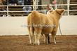 20LC-CattleHS-1558.jpg